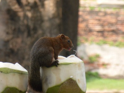 ...and a squirrel having a drink from a coconut!